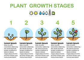 Infographics di fasi di crescita delle piante. Icone di arte di linea. Design piatto.