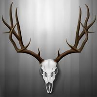 Cráneo de alce realista y astas colgadas en la pared, ilustración vectorial