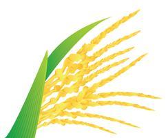 Illustration vectorielle de fleur de noix de coco