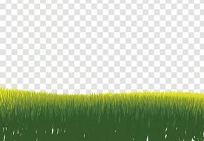 Bordure d'herbe verte, isolée sur fond transparent, avec gra