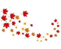 Mapple hojas vector logo y símbolo