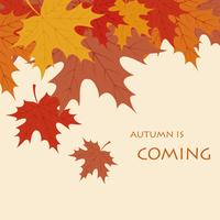 Autumn is coming background vector
