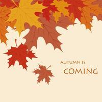 El otoño viene de fondo