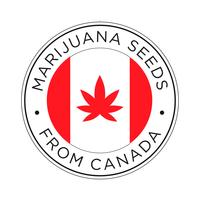Marijuana seeds from Canada icon.  vector
