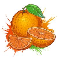 Juicy orange on a white background