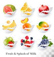 Iconos grandes de la colección de la fruta en un chapoteo de la leche. Guayaba, plátano, naranja, manzana, uva, fresa, granada, melocotón, mango. Conjunto de vectores
