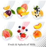 Iconos grandes de la colección de la fruta en un chapoteo de la leche. Guayaba, ciruela, mango, grosella negra, fresa, cereza, arándano, melocotón. Conjunto de vectores