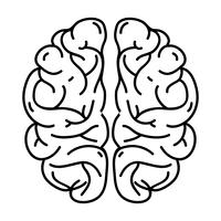 line human brain anatomy to creative and intellect vector