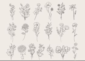 Doodle de conjunto de flor