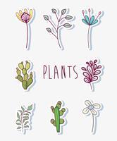 Conjunto de flores