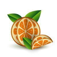 Vector tropical verano frutas exóticas papel corte volumétrico. Origami. Objeto aislado del color en el fondo blanco. Naranja Cítrica Naranja Mandarina Naranja Y Rebanada