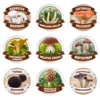 Vector set of mushroom logos, stickers