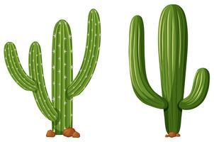 Dos tipos de plantas de cactus.