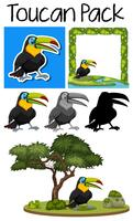 A pack of cute toucan