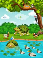 Tortugas y patos en el río.