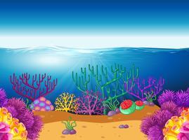 Cena natureza, com, recife coral, submarinas