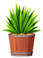 A green plant in pot vector
