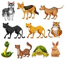 Jogo, de, animal, personagem