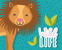 Cute wildlife lion cartoon