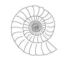 Snail shell on white