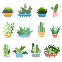 Cactus in set di pentole
