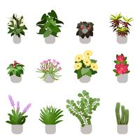 Diverse Flowers In Pots, Isolated On White Background