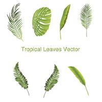 Ensemble d'illustrations de feuilles tropicales