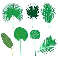 Vector hand drawn flat tropical leaves set