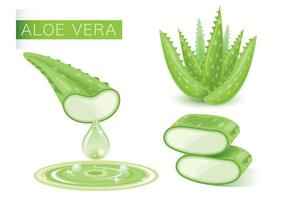 Fresh Green Aloe Vera vector