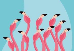 flamingos birds flock heads