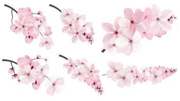 Fleurs de sakura roses vecteur