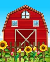 Red barn and sunflowers on fence