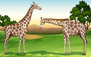 Two giraffes in the field trees