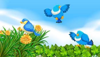 Blåfåglar som flyger i trädgården