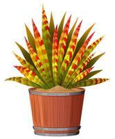 Una pianta con foglie in vaso