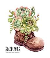 Acuarela colección de suculentas en cuero zapato bota jardín.