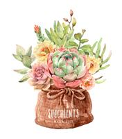 Watercolor succulents in fabric sack bag and rope ribbon