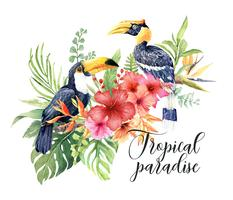 Aquarelle tropicale Grand Calao et Toucan au bouquet d'Hibiscus.
