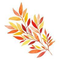 Beautiful Watercolor Autumn Leaf Element