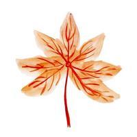 Hermoso elemento otoño acuarela