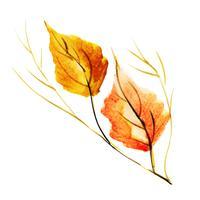 Beautiful Watercolor Autumn Element