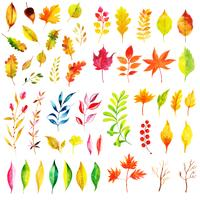Bella collezione di foglie di autunno dell'acquerello