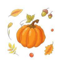Zucca e foglie disegnate a mano.