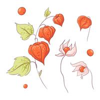 Hand drawn twig physalis and flowers, autumn and leaves.