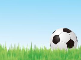 Soccer ball in field  vector