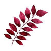 Beautiful Watercolor Autumn Leaf  vector