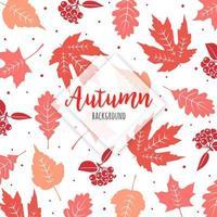 Belles feuilles d'automne colorées