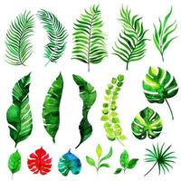 Watercolor Summer Leaves Elements Collection vector