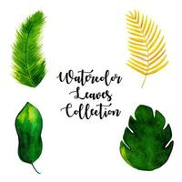 Collection de feuilles d'aquarelle