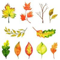 Fall Leaves Collection vector